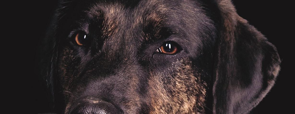 Schwarze Tierheimhunde haben es schwerer