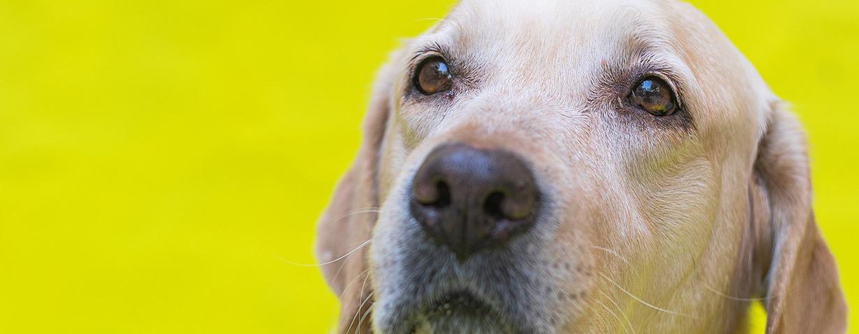 Umstritten und vermeidbar: Krebsversuche an Tieren