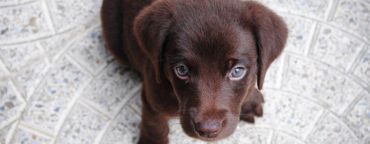 Tierischer Familienzuwachs: Gekommen, um zu bleiben