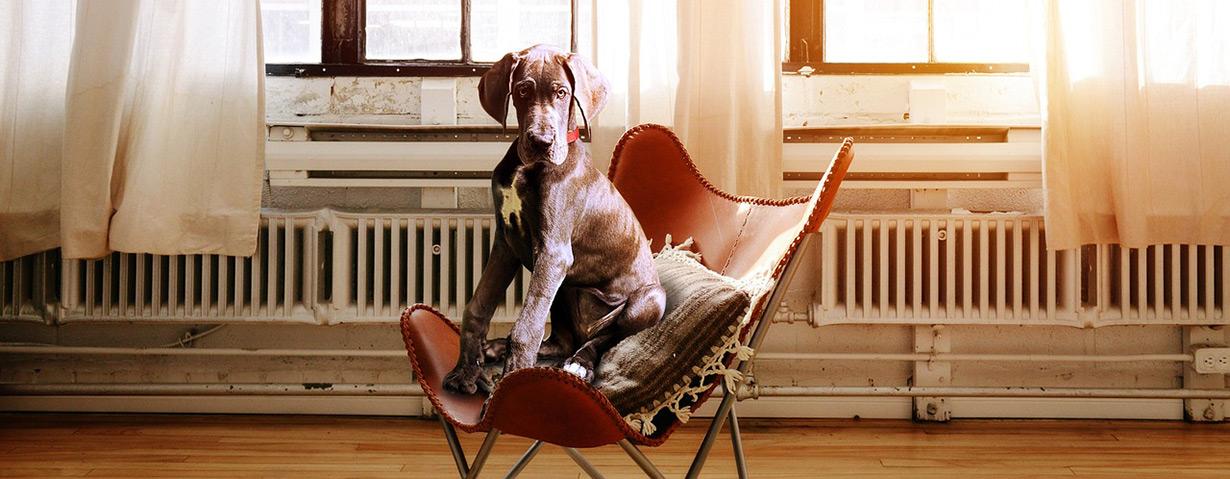 Wie sinnvoll ist es, eine Krankenversicherung für Hunde abzuschließen?