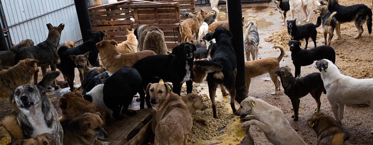 VIER PFOTEN verteilt in Moldawien über 60.000 Mahlzeiten für hungrige Hunde und rettet fünf Welpen