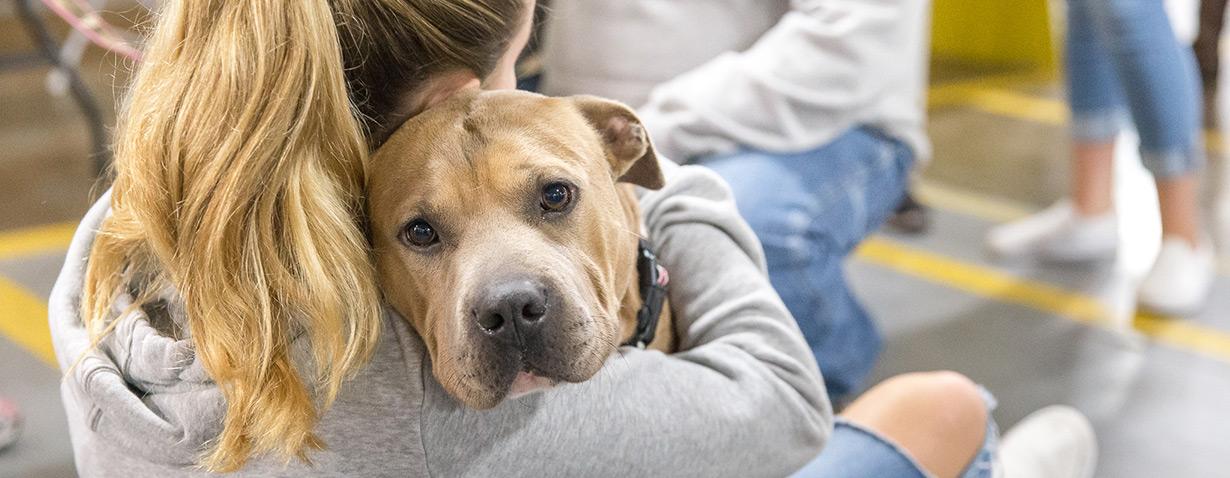 Jeder BISSELL® Kauf hilft Haustieren in Not