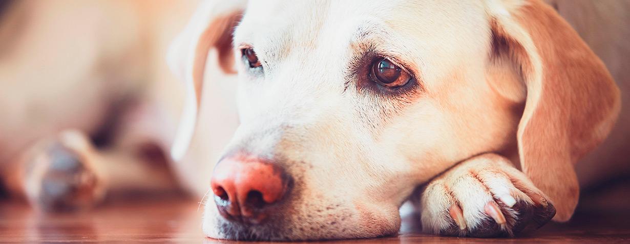 Tiere nach Operationen gezielt unterstützen