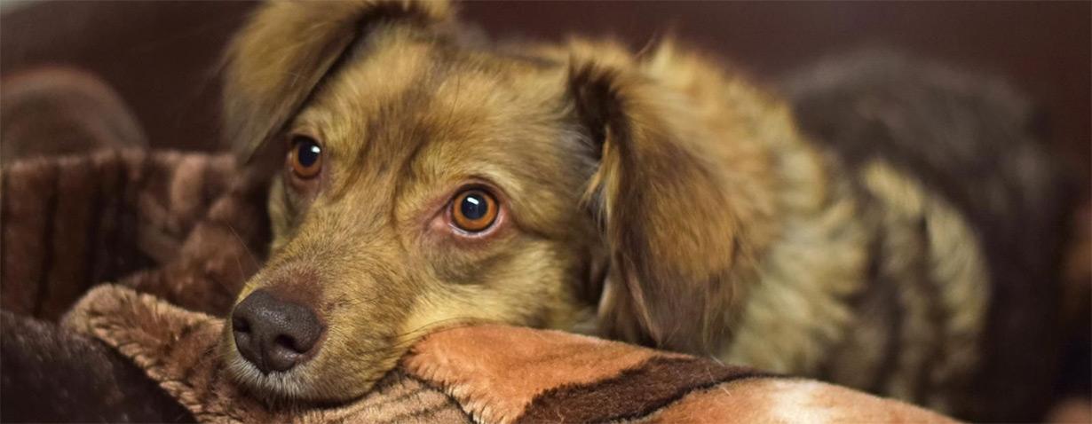 HTV hilft Hunden von wohnungslosen Menschen