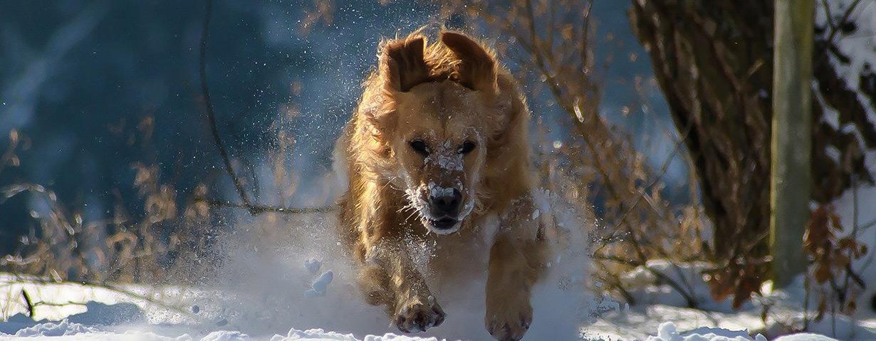 Achtung Schmuddelwetter: PETA-Expertin gibt Tipps für Hundespaziergänge bei Schnee, Eis, Matsch und Regen