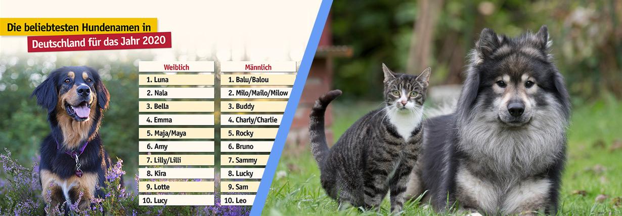 Pressemitteilung: TASSO veröffentlicht die beliebtesten Tiernamen für das Jahr 2020