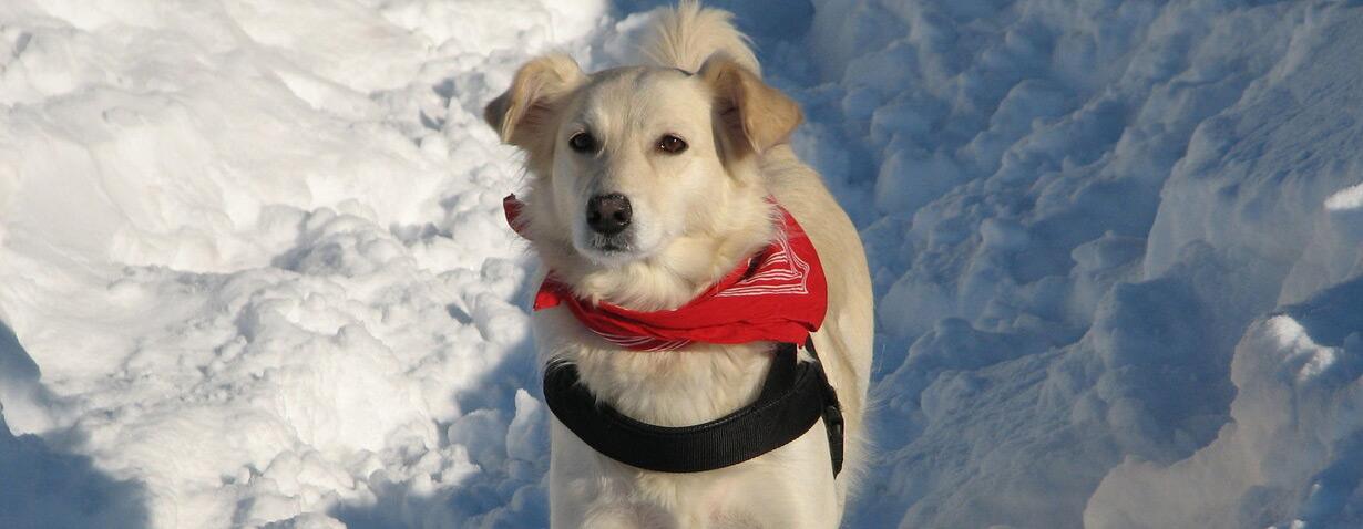 Hundepfoten im Winter: Schutz und Pflege bei Streusalz und Splitt