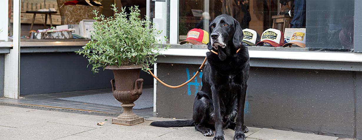 Vorsicht vor Hundediebstahl!