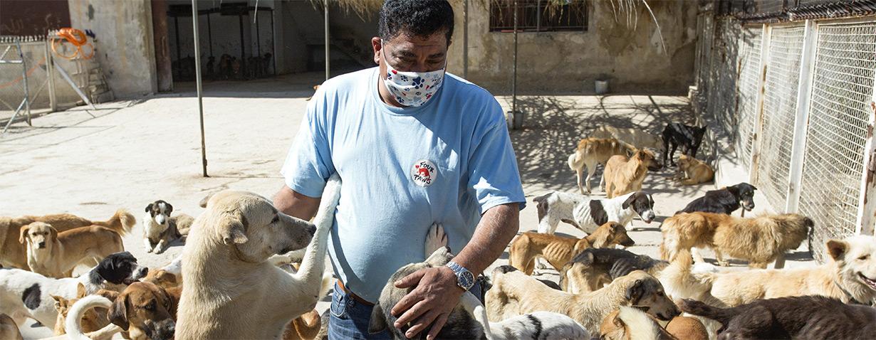 VIER PFOTEN verteilt zehn Tonnen Futter an hungernde Tiere im Libanon