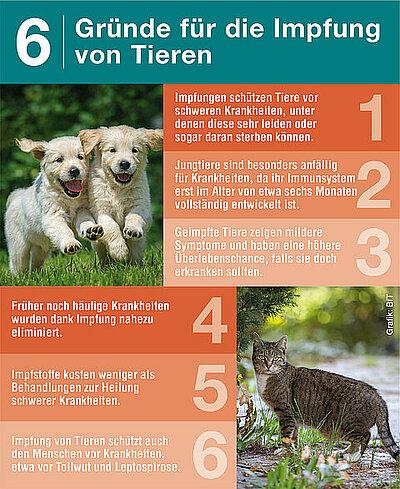 Regelmäßige Impfung schützt Hund und Katze ein Leben lang