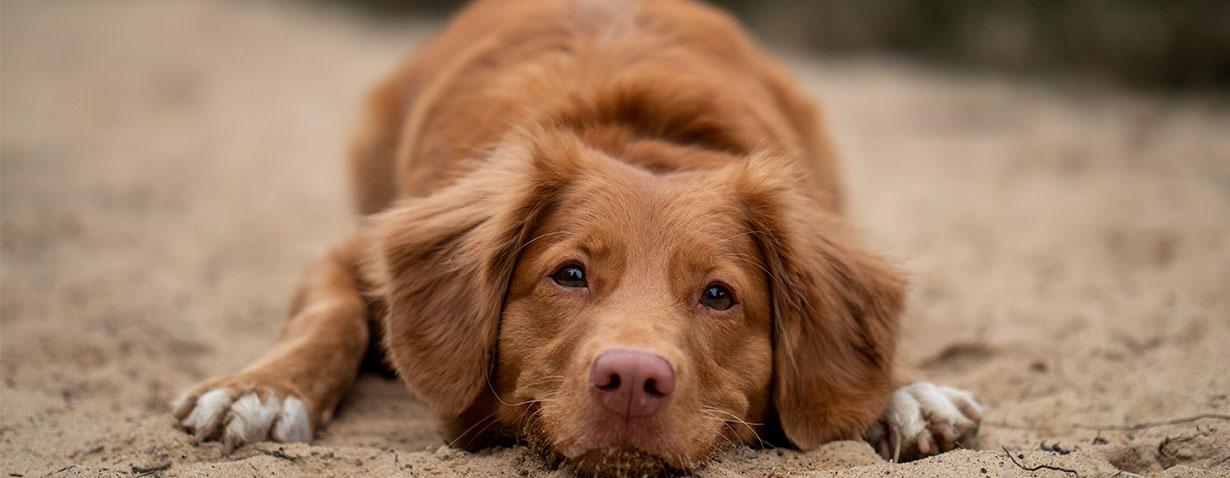 Einen Hund adoptieren – Was es zu beachten gilt