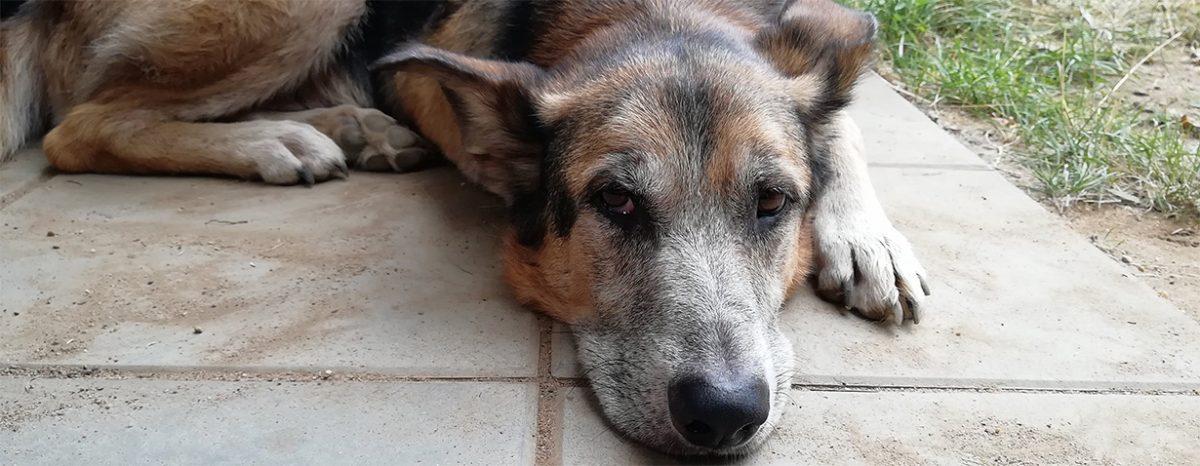 Hund und Katze im Alter Tipps für den Umgang mit Tiersenioren