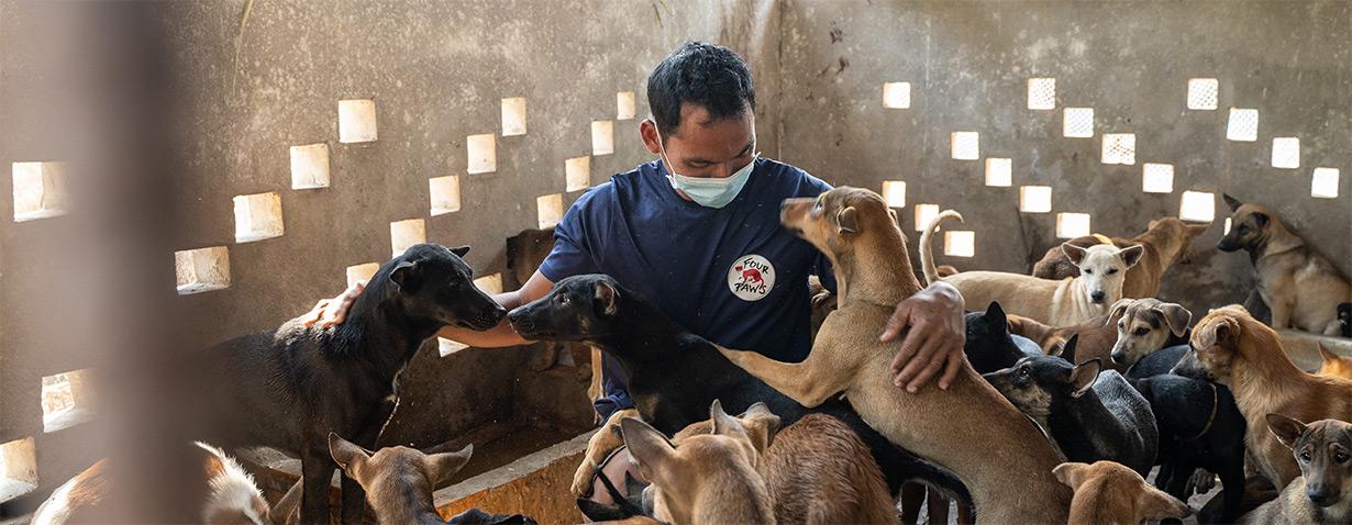 Kambodscha: 61 Hunde auf dem Weg zum Schlachthaus gerettet