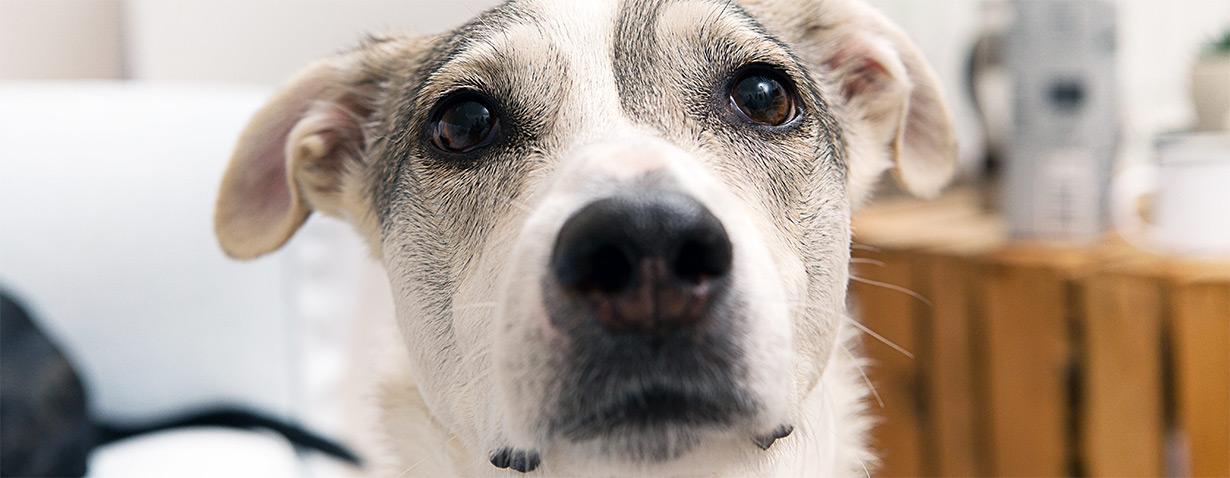 Erfolg: zooplus listet tierschutzkritisches Heimtierzubehör aus