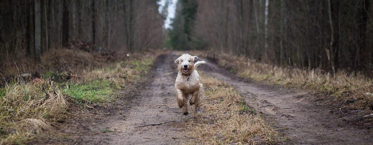 Achtung, Flohzeit! PETA-Expertin gibt Tipps zur Vorbeugung und Behandlung von Flohbefall bei Hunden und Katzen