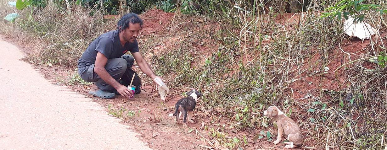 Im Schatten der Coronakrise: Das Leid streunender Tiere wächst weltweit