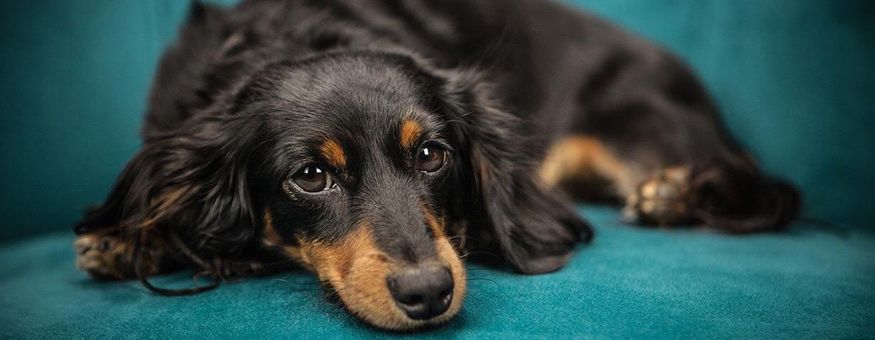 Welche Kosten übernimmt eine Hundekrankenversicherung?