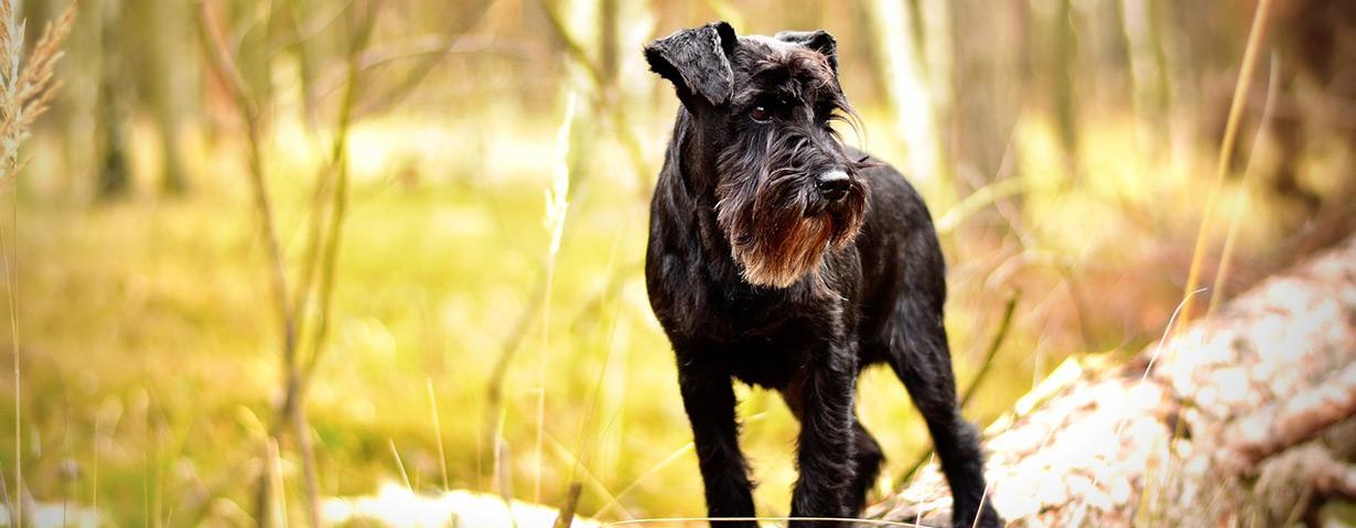 Alle Jahre wieder: Plage für Hund und Katze