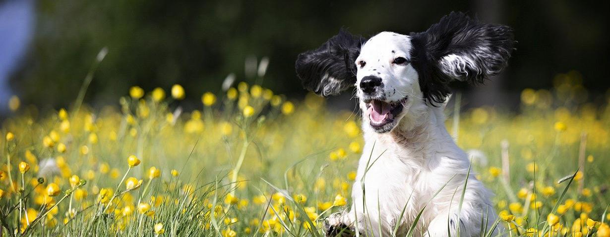 Ist Hundewurst gesund?