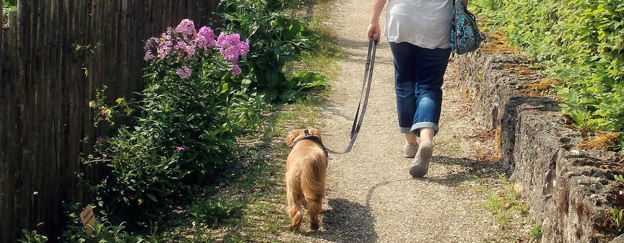 Worauf man beim Gassigehen mit dem Hund unbedingt achten muss