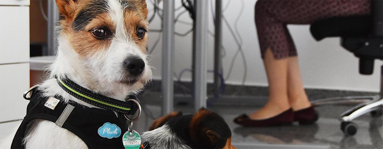 Schluss mit Home-Office: Wohin mit dem Hund?