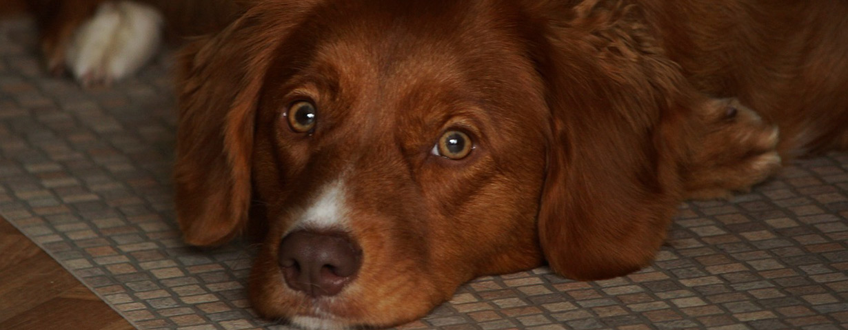 Wenn der tierische Liebling zu Hause bleiben muss – TASSO e.V. gibt Tipps für die Urlaubsbetreuung