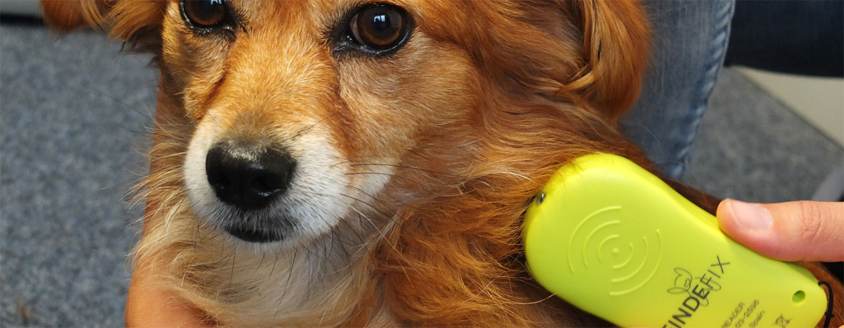 Mit einem Chiplesegerät lässt sich der Mikrochip eines Hundes leicht und schnell auslesen – und dann der Besitzer ermitteln.