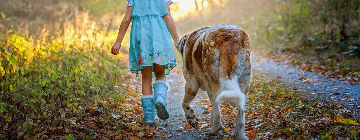 Haushalt mit Hund: Wie hält man im Herbst die Wohnung sauber?