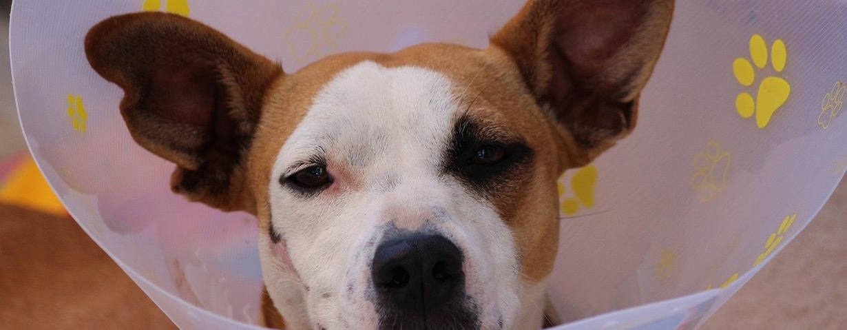 Urteile rund um Tierärzte und ihre tierischen Patienten
