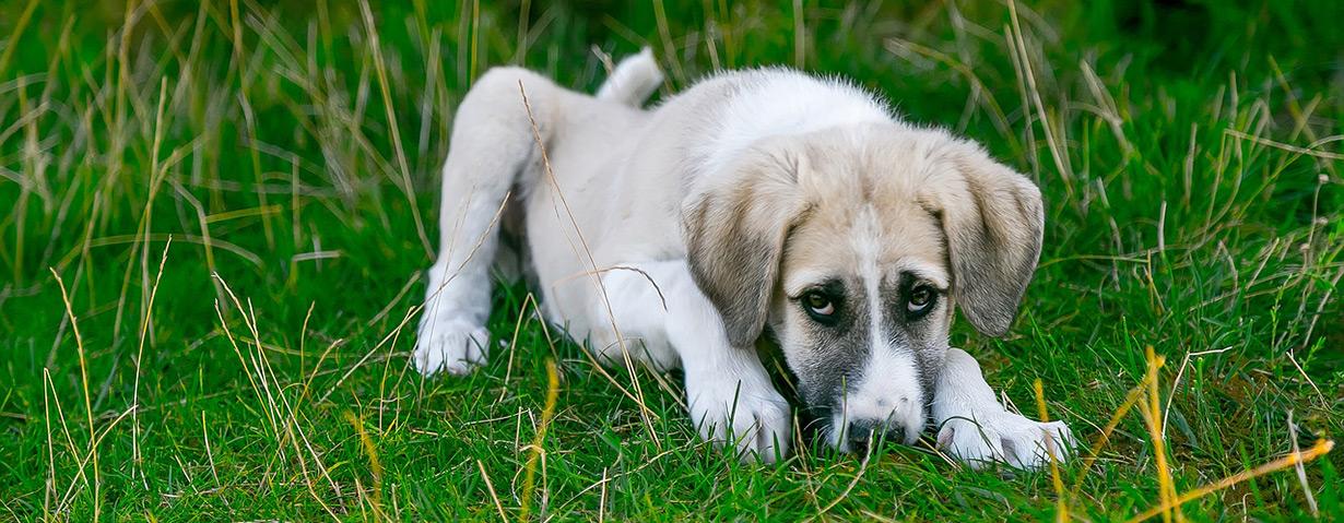 Was tun, wenn der Hund sich krank fühlt?
