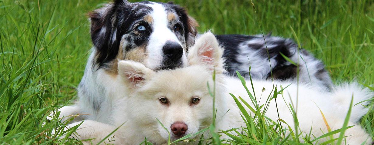 Die richtige Hundekrankenversicherung - ein Schutz vor hohen Behandlungskosten