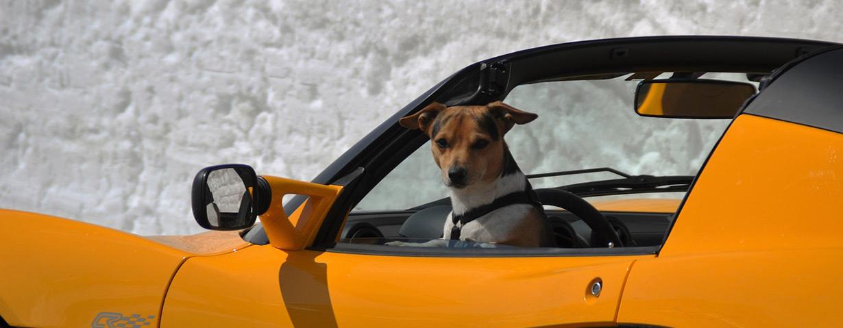 Mit dem Hund ins Ausland reisen: Was ist zu beachten?