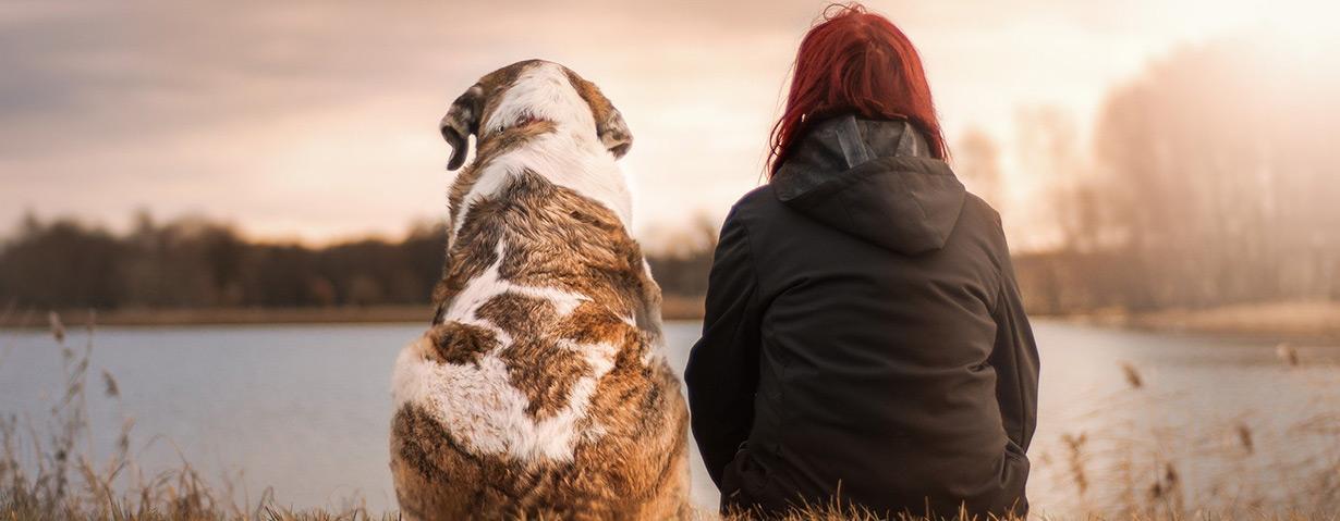 Die Hundeversicherung – Eine wichtige Absicherung für Hund und Besitzer