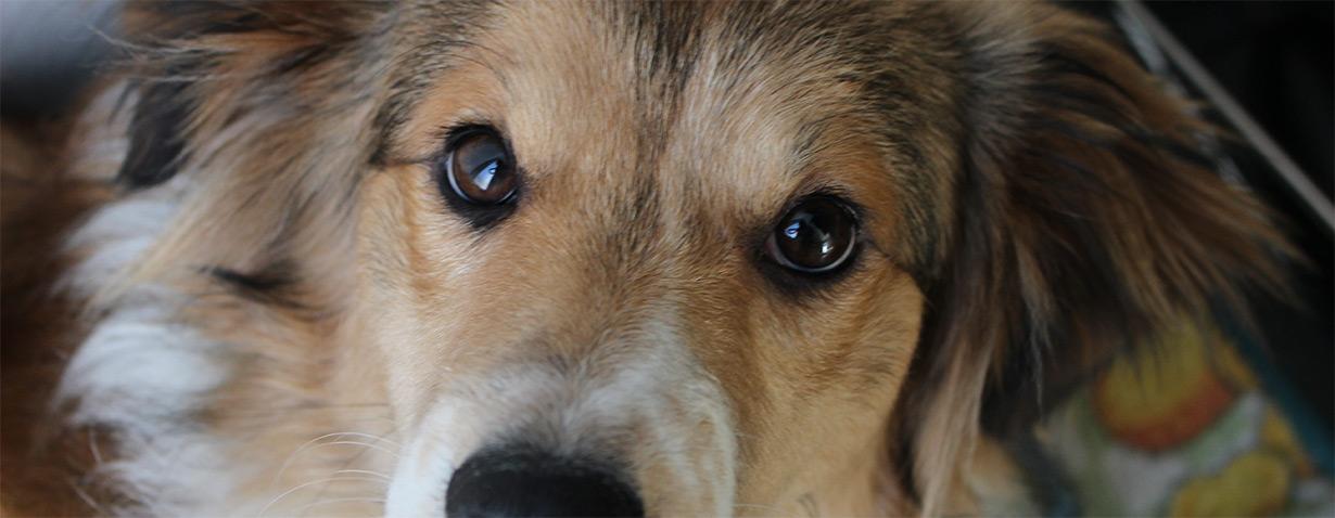 Chance für Tier und Mensch: Pflegestelle für Hunde