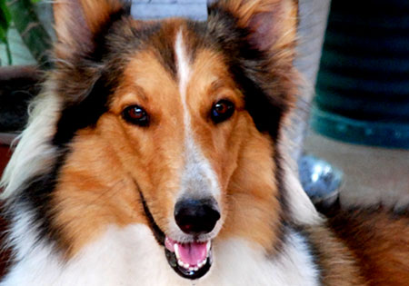 Lassie braun 28 - 3 8