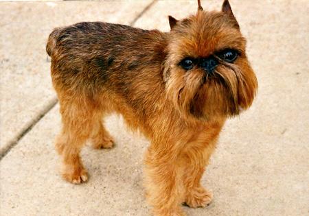 Verdell Dog Breed